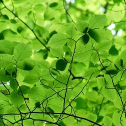 leaves-167478_1280
